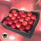 Picture of APPLE CRUNCHY KIDS 5KG BOX
