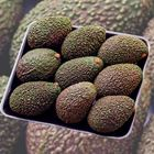 Picture of AVOCADO HASS 1KG