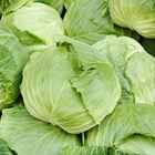 Picture of CABBAGE PLAIN WHOLE