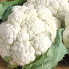 Picture of CAULIFLOWER  2 FOR $6