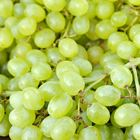 Picture of GRAPE GREEN SEEDLESS 800G+