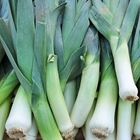 Picture of LEEKS LARGE