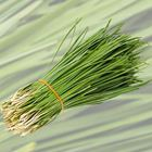 Picture of GARLIC CHIVES 250G