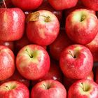 Picture of APPLE PINK LADY 1KG