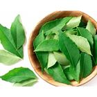 Picture of HERB CURRY LEAF 100G