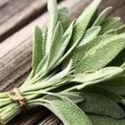 Picture of HERB SAGE BUNCH