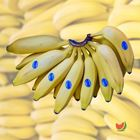 Picture of BANANA LADY FINGER 1KG