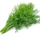 Picture of HERB DILL BUNCH