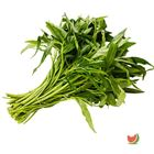 Picture of KANGKONG 500G 2 FOR $10
