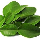 Picture of HERB KAFFIR LIME LEAVES 10GM
