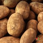 Picture of POTATO BRUSHED 1KG