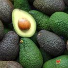 Picture of AVOCADO HASS SIZE 25'S 2 FOR $6