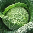Picture of CABBAGE SAVOY WHOLE