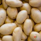 Picture of POTATO WASHED 1KG