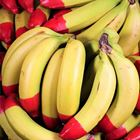 Picture of BANANA ECO 1KG