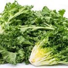 Picture of ENDIVE BUNCH