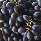 Picture of GRAPE BLACK BAG (800G-900G)