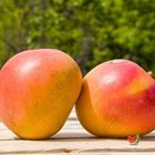 Picture of MANGO R2E2 LARGE 2 FOR $10