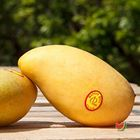 Picture of MANGO TPP 1KG