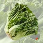 Picture of CABBAGE MUSTARD 1KG