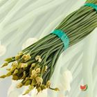 Picture of ONION FLOWER BUNCH 2 FOR $6