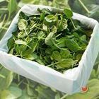 Picture of BABY SPINACH 1.5KG BOX