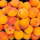 Picture of APRICOT SMALL 1KG