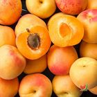 Picture of APRICOT XL 1KG