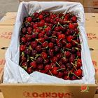 Picture of CHERRY - JACKPOT 5KG