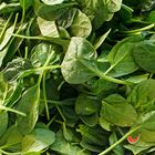 Picture of BABY SPINACH LOOSE 1KG