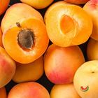 Picture of APRICOT LARGE