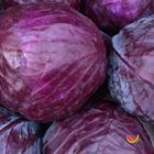 Picture of CABBAGE RED WHOLE