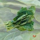 Picture of CHINESE BROCCOLI BUNCH 3 FOR $4.40