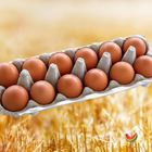 Picture of EGG FREE RANGE 700G