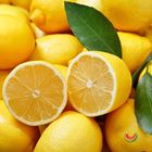Picture of LEMON PREMIUM