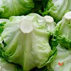 Picture of LETTUCE ICEBERG 2 FOR $5.50