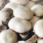 Picture of MUSHROOM FLAT 1KG