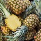 Picture of PINEAPPLE SMOOTH TOP ON LARGE