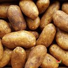 Picture of POTATO DUTCH CREAM 1KG