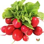Picture of RADISH RED 2 FOR $4.40