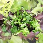 Picture of SALAD MIX LOOSE 1KG