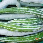 Picture of SNAKE GOURD 1KG