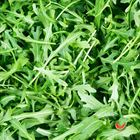 Picture of WILD ROCKET LOOSE 1KG