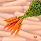 Picture of DUTCH CARROT 2 FOR $4.40