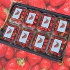 Picture of STRAWBERRY BOX (8 PUNNETS)