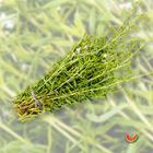 Picture of THYME
