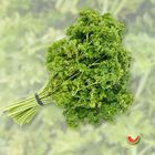 Picture of CURLY PARSLEY 2 FOR $3.30