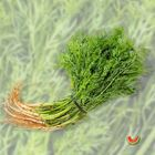 Picture of DILL BUNCH
