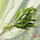 Picture of HERB SAGE