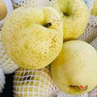 Picture of PEAR ASIAN GOLD NASHI PREMIUM